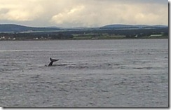 20120730 PC Wk24 Cromarty Dolphins 20120730_193254