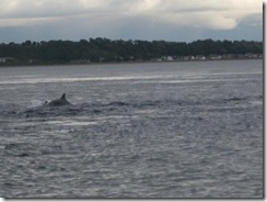20120731 Camera Wk24 Cromarty Dolphins IMG_8244