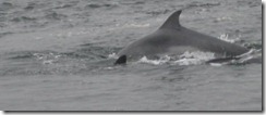 20120802 Camera Wk24 Cromarty Dolphins IMG_8445