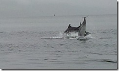 20120802 PC Wk24 Cromarty Dolphins 20120802_085306