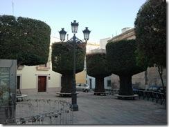 AlmeriaTrees