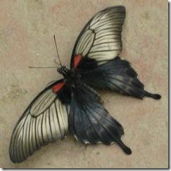 Wk2 Butterfly1
