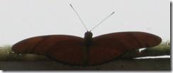 Wk2 Butterfly2