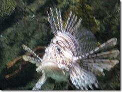 aquarium_0005