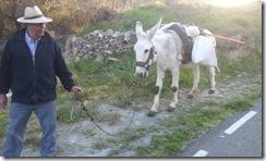 donkey20120316_183219
