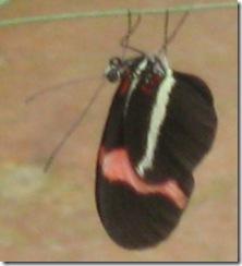 wk2 Butterfly3