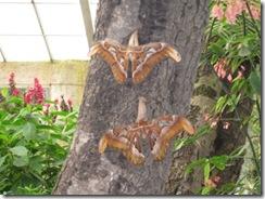 wk2 Butterfly4